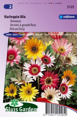 African Daisy Harlequin Mix Seeds 4 Garden
