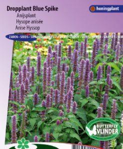 Anise Hyssop Blue Spike Seeds 4 Garden