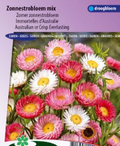 Australian or Crisp Everlasting giantflowered Mix Seeds 4 Garden