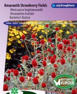 Bachelor's button haageana Strawberry fields Seeds 4 Garden