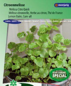 Balm lemon (Cure-all) Citro Quick Seeds 4 Garden