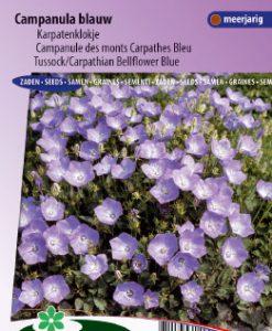 Bellflower Carpathian Blue