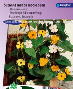 Black-eyed Susan Mix Seeds 4 Garden