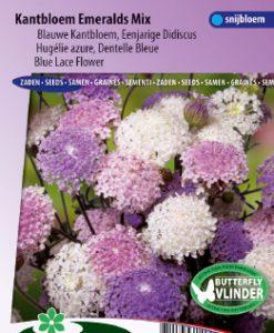 Blue Lace Flower Emeralds Mix (Didiscus) Seeds 4 Garden