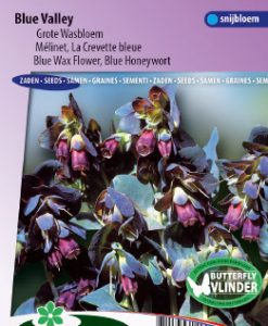 Blue Wax Flower Blue Valley Seeds 4 Garden