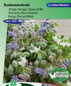 Borage Blue and White (Borago officinalis) Seeds 4 Garden