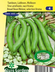 Broad bean Meteor selection Vroma Seeds 4 Garden