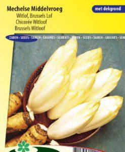 Brussels witloof Mechelse Middelvroeg Seeds 4 Garden