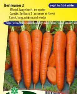 Carrot Berlikumer 2 (Long Autumn and Winter) Seeds 4 Garden