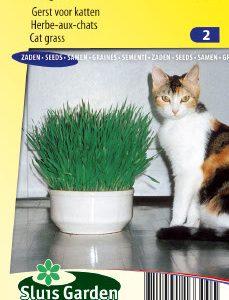 Cat grass Seeds 4 Garden