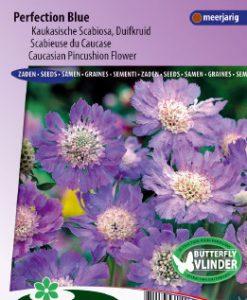 Caucasian Pincushion Flower