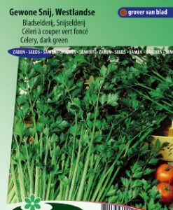 Celery Westland common cutting (Apium Graveolens) Seeds 4 Garden