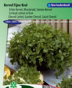 Chervil curled