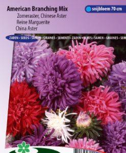 China aster American Branching Mix Seeds 4 Garden