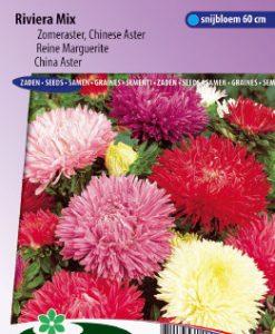 China aster Riviera Mix Seeds 4 Garden