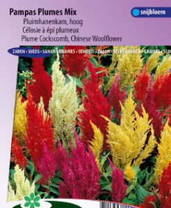 Cockscomb or Chinese woolflower Pampas Plume Mix Seeds 4 Garden