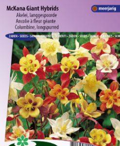 Columbine McKana Giant Hybrids (longspurred) Seeds 4 Garden