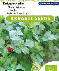 Coriander slowbolting (Coriandrum sativum) EKO Seeds 4 Garden