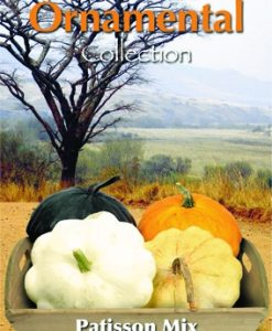 Courgette/Patisson Colour Mix Seeds 4 Garden