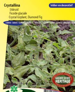 Crystak Iceplant Crystallina (Diamond Fig) Seeds 4 Garden