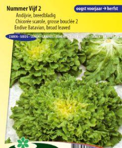 Endive Batavian broad leaved 2 Seeds 4 Garden