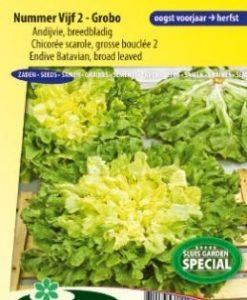 Endive Batavian broad leaved 2 - Grobo Seeds 4 Garden
