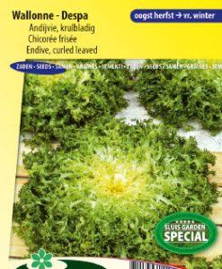 Endive Wallonne - Despa (curled leaved) Seeds 4 Garden
