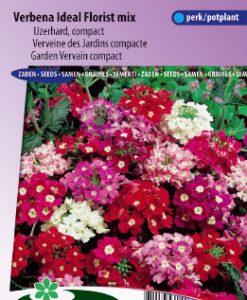 Garden Vervein Ideal Florist mix