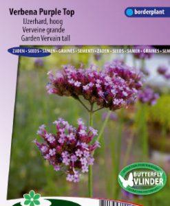 Garden Vervein Purple Top