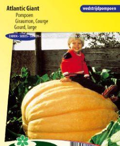 Gourd (large) Atlantic Giant Seeds 4 Garden