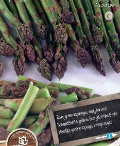 Green Asparagus Seeds 4 Garden
