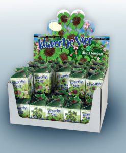 Greengift Lucky four leaf clover 40 pcs in showbox Seeds 4 Garden