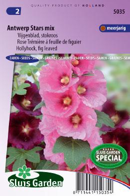 Hollyhock Antwerp Stars single mix Seeds 4 Garden