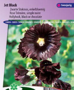 Hollyhock Nigra Jet Black Seeds 4 Garden