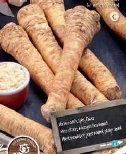Horseradish (Armoracia rusticana) Seeds 4 Garden