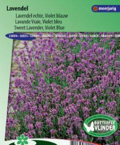 Lavender Sweet Violet Blue (Lavendula vera) Seeds 4 Garden