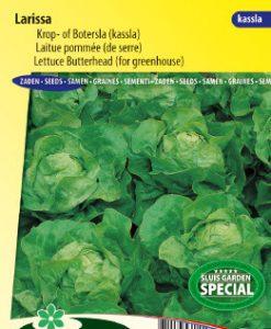 Lettuce Butterhead Larissa Seeds 4 Garden