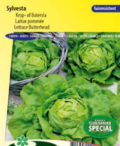 Lettuce Butterhead Sylvesta Seeds 4 Garden