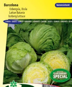 Lettuce iceberg Barcelona Seeds 4 Garden