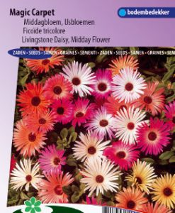 Livingstone Daisy Magic Carpet mix Seeds 4 Garden