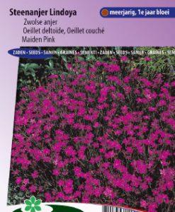 Maiden Pink Lindoya (carmine red) Seeds 4 Garden