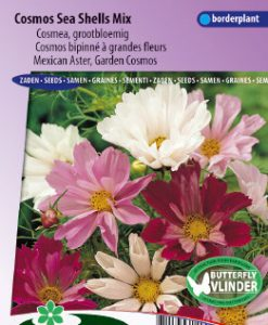 Mexican Aster