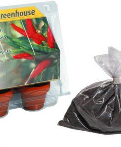 Mini Greenhouse Chilli Pepper Seeds 4 Garden
