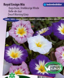 Morning Glory (Convolvulus) dwarf Choice Mix Seeds 4 Garden