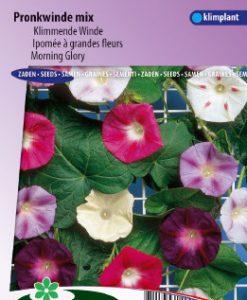 Morning glory Choice Mix Seeds 4 Garden