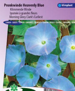 Morning glory Clark's earliest Heavenly Blue Seeds 4 Garden