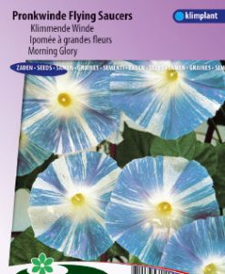 Morning glory Flying Saucers Seeds 4 Garden
