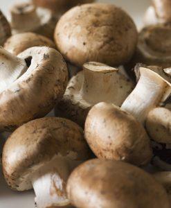 Mushroom-kit Brown Seeds 4 Garden