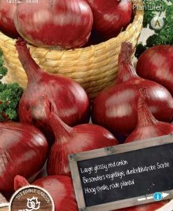 Onion Sets Red 200 gram Seeds 4 Garden
