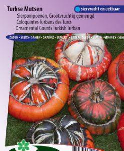 Ornamental Gourd Large Fruited Turkish Turban Seeds 4 Garden